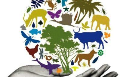 """ملتقى وطني :"""" التنوع الحيوي للنبات والحيوان المحيط والصحة"""""""